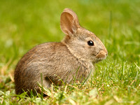 Brush Rabbit 110805-103723-MK3-7731