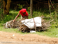 Woman collecting wood fuel along hwy 081210-MK3-5505