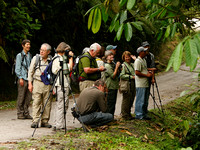Portland Audubon birding group in Panama 110420-MK3-1703