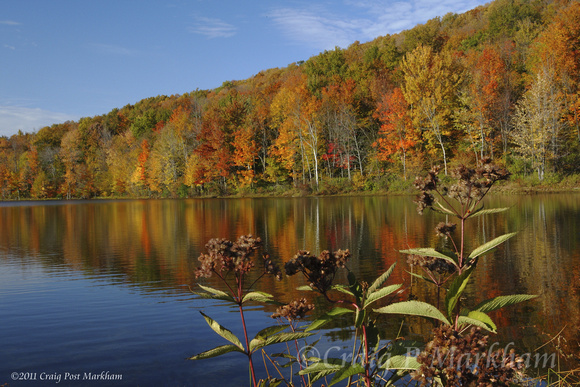 NY fall colors w lake, Joe Pie Weed 091019-MK3-7421